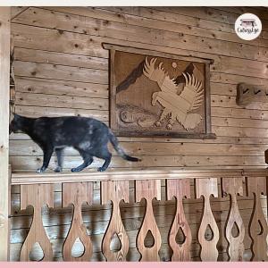 Dolomiti Village: un alloggio naturalmente gattificato